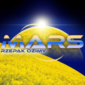 Rzepak – nasiona rzepaku – odmiany rzepaku – HR Strzelce Mars