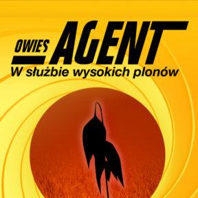 Owies - Najlepszy Owies - Nasiona Owsa